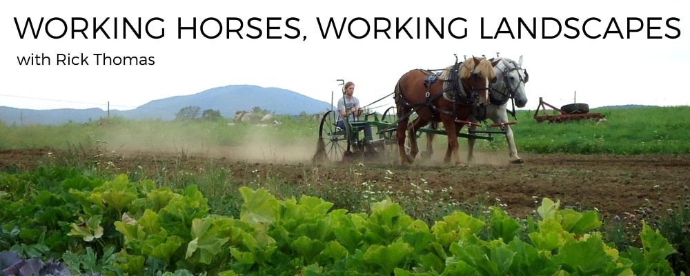 Working Horses Working Landscapes
