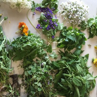 foraging and wildcrafting