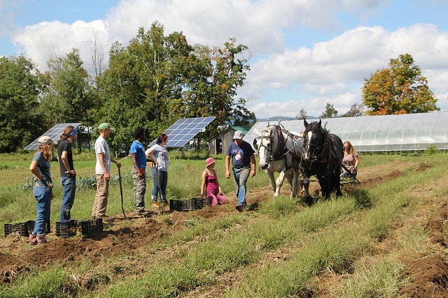 Students at Sterling sow potatoes with a team of draft horses
